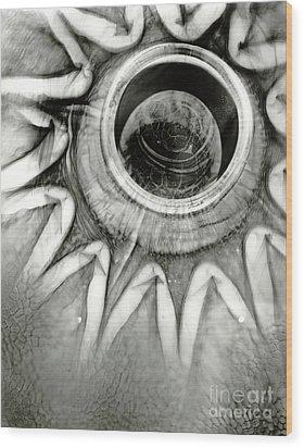 Em15 Wood Print by Mark Stankiewicz