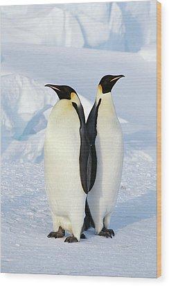Emperor Penguins, Weddell Sea Wood Print by Joseph Van Os