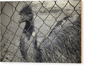 Emu At The Zoo Wood Print by Luke Moore