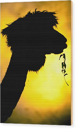 Endless Alpaca Wood Print by TC Morgan