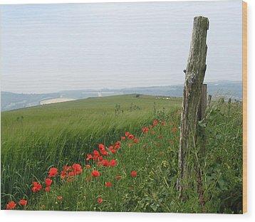 England Sussex Poppy Field Wood Print by Yvonne Ayoub