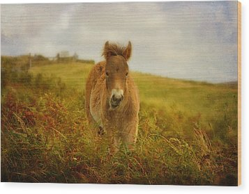 Exmoor Wild Pony Wood Print by Carla Parris