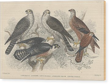 Falcons Wood Print by Oliver Goldsmith