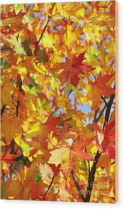 Fall Leaves Background Wood Print by Carlos Caetano