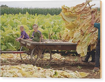 Family Tobacco Harvest Wood Print by Joyce Huhra