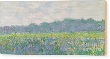 Field Of Yellow Irises At Giverny Wood Print by Claude Monet