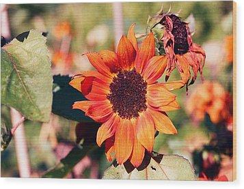 Fire Flower Wood Print by Jonathan Michael Bowman