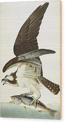 Fish Hawk Wood Print by John James Audubon