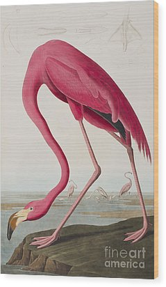 Flamingo Wood Print by John James Audubon