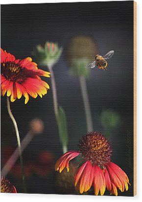 Flight Of A Honey Bee Wood Print by Joseph G Holland