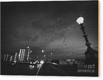 Flock Of Starlings Flying In Murmuration Over Lamp On Albert Bridge Belfast Northern Ireland Uk Wood Print by Joe Fox