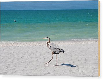 Florida Sanibel Island Summer Vacation Beach Wildlife Wood Print by ELITE IMAGE photography By Chad McDermott