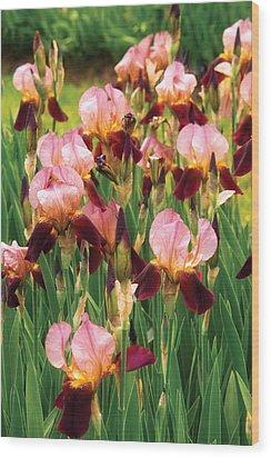Flower - Iris - Gy Morrison Wood Print by Mike Savad