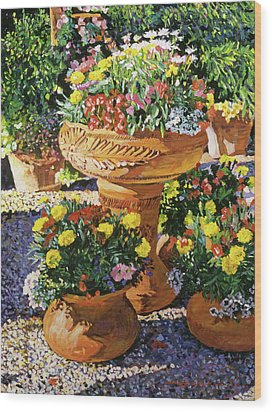 Flower Pots In Sunlight Wood Print by David Lloyd Glover