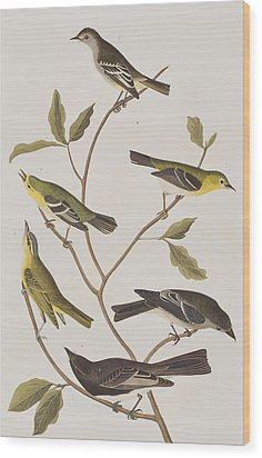 Fly Catchers Wood Print by John James Audubon