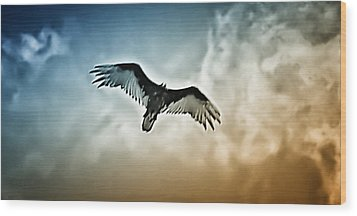 Flying Falcon Wood Print by Bill Cannon