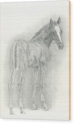 Foal Wood Print by Jennifer Nilsson