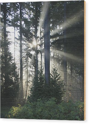 Forest Sunrise Wood Print by Crista Forest