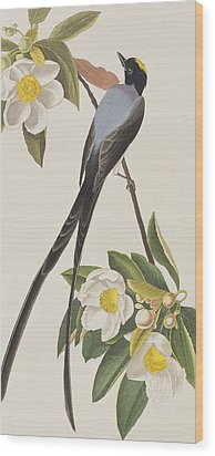 Fork-tailed Flycatcher  Wood Print by John James Audubon
