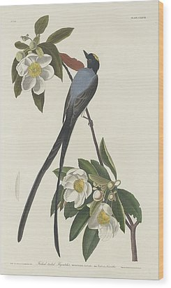 Forked-tail Flycatcher Wood Print by John James Audubon