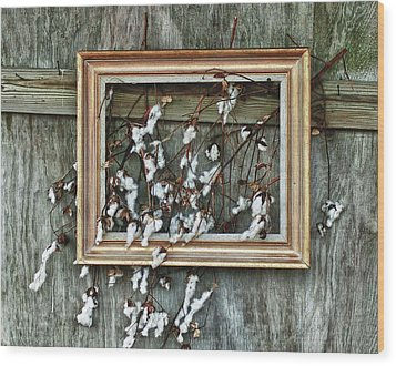 Framed Cotton Wood Print by Michael Thomas