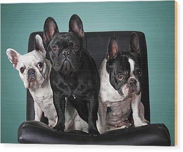 French Bulldogs Wood Print by Retales Botijero