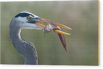 Fresh Catch Wood Print by Alfred Forns