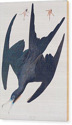 Frigate Penguin Wood Print by John James Audubon