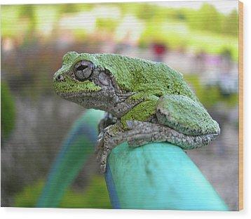 Frog Watering Plants Wood Print by Randy Rosenberger