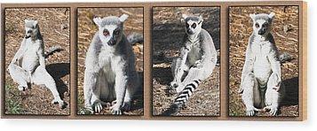 Funny Lemurs Wood Print by Svetlana Sewell