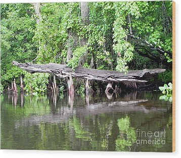 Gator Stump Wood Print by Jack Norton