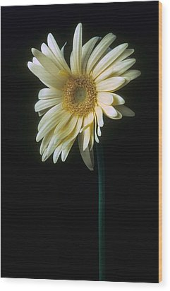 Gerber Daisy Wood Print by Laurie Paci