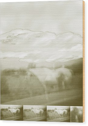 Ghost Horse Colorado Wood Print by Ann Tracy