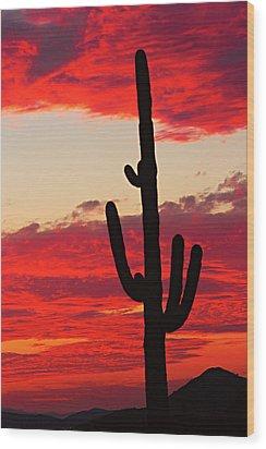Giant Saguaro  Southwest Desert Sunset Wood Print by James BO  Insogna
