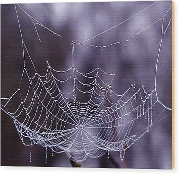 Glistening Web Wood Print by Karol Livote