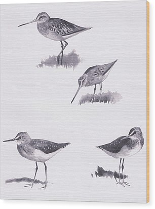 Godwits And Green Sandpipers Wood Print by Archibald Thorburn
