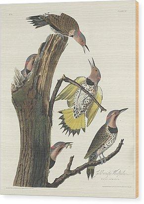 Gold-winged Woodpecker Wood Print by John James Audubon