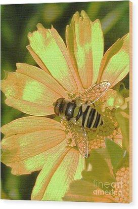 Golden Bee Wood Print by Karol Livote