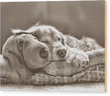 Golden Retriever Dog Sleeping With My Friend Sepia Wood Print by Jennie Marie Schell