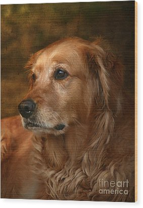 Golden Retriever Wood Print by Jan Piller