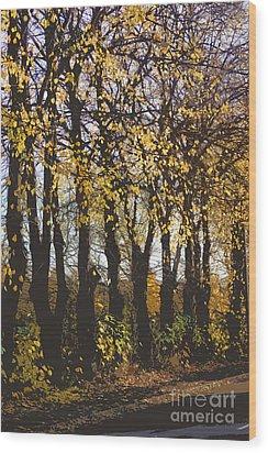 Golden Trees 1 Wood Print by Carol Lynch