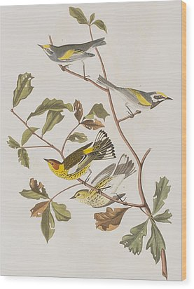 Golden Winged Warbler Or Cape May Warbler Wood Print by John James Audubon
