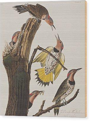 Golden-winged Woodpecker Wood Print by John James Audubon
