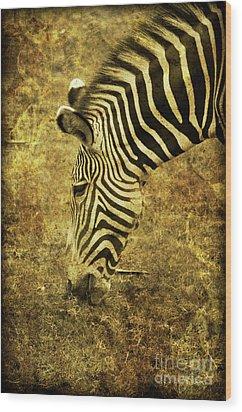 Golden Zebra  Wood Print by Saija  Lehtonen