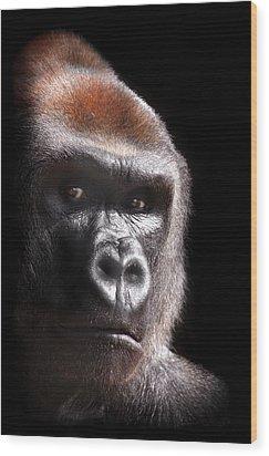 Gorilla ... Kouillou Wood Print by Stephie Butler