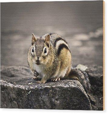 Got Nuts Wood Print by Evelina Kremsdorf