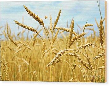 Grain Field Wood Print by Elena Elisseeva