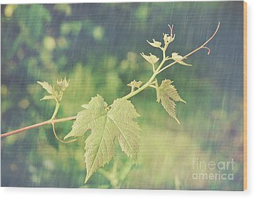Grape Vine Against Summer Background Wood Print by Sandra Cunningham