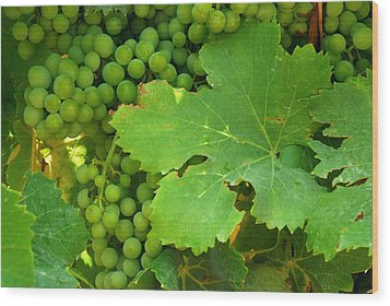 Grape Vine Heavy With Green Grapes Wood Print by Anne Keiser