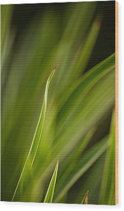 Grass Abstract 2 Wood Print by Mike Reid